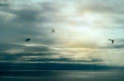 Calme après tempête. Oiseaux volant au-dessus de l'océan avec des nuages de tempête. Allez le faire Images stock