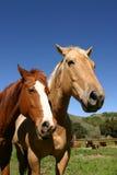 Calme au ranch Images stock