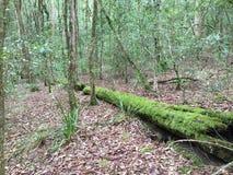 Calme de Moss Mountain Forrest Photos stock