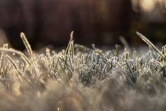 A calming and charming morning on the garden. A grass is covered hoarfrost and sun sending beautifly yellow light.  royalty free stock images