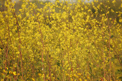 Calming Field in Spring Abstract. Royalty Free Stock Images