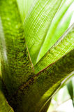 Calming green series. Part of a series of plant photos focused on the color green and its associated mood Stock Image