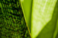 Calming green series. Part of a series of plant photos focused on the color green and its associated mood Royalty Free Stock Photos