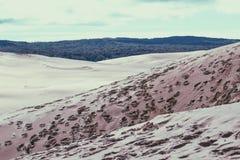 Sand dunes. Calming peace wallpaper scenery beautiful background tress leaves sanddunes Royalty Free Stock Photo