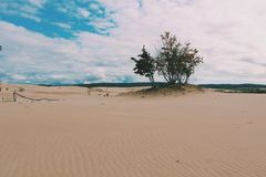 Sand dunes. Calming peace wallpaper scenery beautiful background tress leaves sanddunes Stock Image