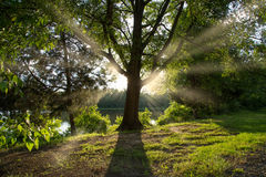 Calming sunshine behind the tree. Sun rays coming from the sun behind the tree near the lake in the forest Stock Photos