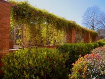 Calming View of Vines. With Red Bricks Royalty Free Stock Images