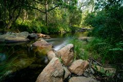 Calmly flowing stream stock images