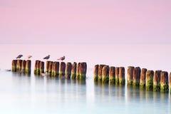 Calmness alla spiaggia. fotografia stock libera da diritti