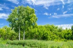 Calmness. Birch on blue sky background Royalty Free Stock Photography