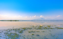 Calmness lake in the morning with mountain. And reflection in the water, Kwan Phayao or Phayao Lake Northern of Thailand Royalty Free Stock Photo