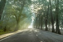 Calmness pine forests street with rays of sunrise. Calmness pine forests with the rays of the sunrise in the morning on the beautiful country road stock photos