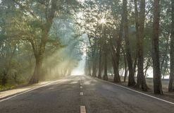 Calmness pine forests street with rays of sunrise. Calmness pine forests with the rays of the sunrise in the morning on the beautiful country road royalty free stock photo