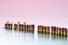 Calmness at seaside. royalty free stock photography