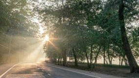 Calmness sosnowi lasy uliczni z promieniami wschód słońca obraz stock