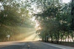 Calmness sosnowi lasy uliczni z promieniami wschód słońca obraz royalty free