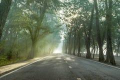 Calmness sosnowi lasy uliczni z promieniami wschód słońca zdjęcia stock