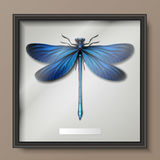 Calopteryx Virgo dragonfly Stock Photo