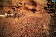 Calor - árbol de la sequía y rocas secas Foto de archivo