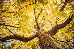 Calor da natureza - Autumn Tree Fotografia de Stock