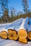 Calor de los troncos del pino Fotos de archivo libres de regalías