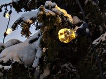Calor dos Evergreens Imagem de Stock