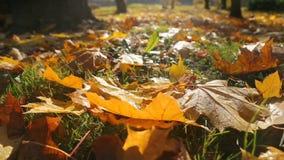 Calor pasado del verano indio, hojas de otoño de la caída en la hierba almacen de metraje de vídeo