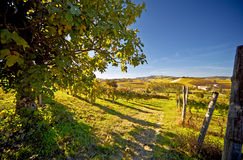 Calosso (Piemonte, Italië): landschap Stock Afbeelding