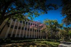 Caltech Royaltyfri Bild