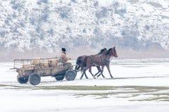 Calugareni, Румыния - 17-ое января: Лес Calugareni 1-ого января Стоковые Фотографии RF
