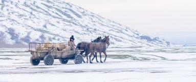 Calugareni, Румыния - 17-ое января: Лес Calugareni 1-ого января Стоковое Фото