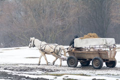 Calugareni, Romania - January 17: Calugareni forest on January 1 royalty free stock photos