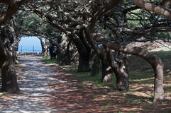 Calvary avenue of trees at Ialyssos Royalty Free Stock Images