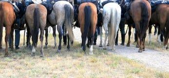 Calvary horses. Stock Image