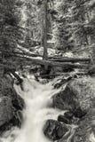 Calypso Cascades Forest Black und Weiß lizenzfreie stockfotografie