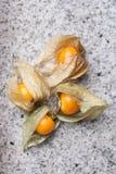 An calyx open, exposing the ripe fruit of physalis peruviana Royalty Free Stock Image
