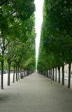 Calzada alineada árbol Foto de archivo
