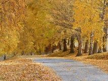 Calzada alineada árbol con caída de la hoja del otoño foto de archivo