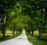 Calzada alineada árbol largo Imagenes de archivo
