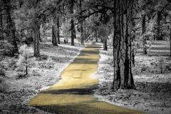 Calzada amarilla en el Gran Cañón Fotos de archivo libres de regalías