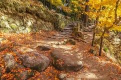 Calzada con Autumn Leaf colorido Imagen de archivo libre de regalías