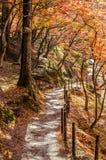 Calzada con Autumn Leaf colorido Fotografía de archivo libre de regalías
