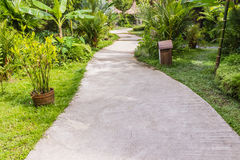 Calzada concreta en jardín tropical Foto de archivo