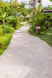 Calzada concreta en jardín tropical Fotografía de archivo libre de regalías