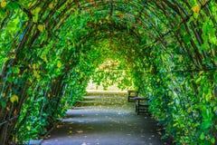 Calzada cubierta por las hojas verdes Fotografía de archivo