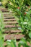 Calzada de la naturaleza en el jardín Foto de archivo