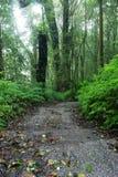 Calzada de la selva tropical Foto de archivo libre de regalías