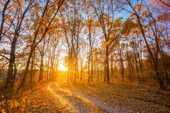 Calzada de la trayectoria del camino del campo de la bobina a través de Autumn Forest Sunset imagen de archivo