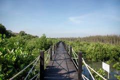 Calzada de madera en el bosque del mangle Imágenes de archivo libres de regalías