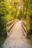 Calzada de madera que lleva a la selva profunda tropical del bosque fotografía de archivo libre de regalías